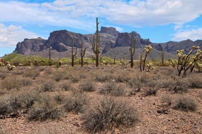 Apache Junction Residential Lots & Land For Sale: 800 N Prospector Road