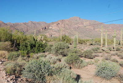 Gold Canyon Residential Lots & Land For Sale: 3686 S Kings Ranch Court