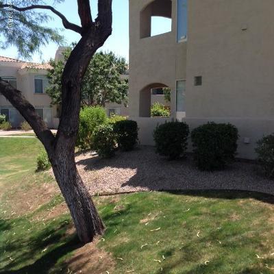 Phoenix Rental For Rent: 1747 E Northern Avenue #179