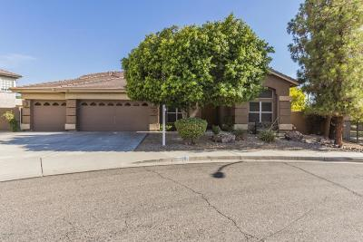 Glendale Single Family Home For Sale: 6541 W Via Montoya Drive