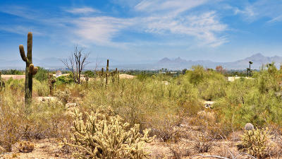 Paradise Valley Residential Lots & Land For Sale: 7525 N Ironwood Drive