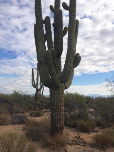 Scottsdale Residential Lots & Land For Sale: 165 E Rio Verde Drive