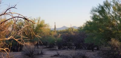 Scottsdale Residential Lots & Land For Sale: 163xx E Lone Mountain Lot 168 Road