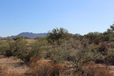 Scottsdale Residential Lots & Land For Sale: 29700 N 143rd Street