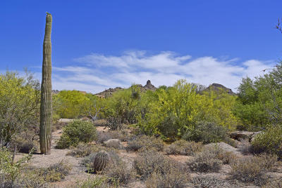 Scottsdale Residential Lots & Land For Sale: 9812 E Running Deer Trail