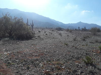 Phoenix Residential Lots & Land For Sale: 18324 S 23rd Avenue