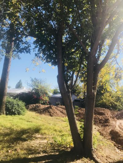 Phoenix Residential Lots & Land For Sale: 205 E Griswold Road