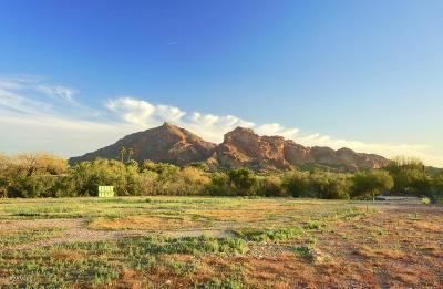 Paradise Valley Residential Lots & Land For Sale: 6720 N Joshua Tree Lane