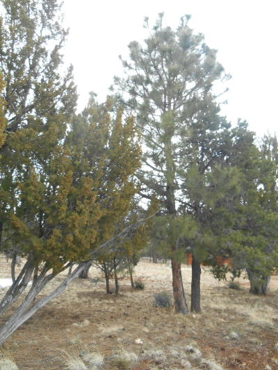 Overgaard AZ Residential Lots & Land For Sale: $89,495