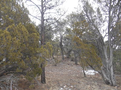 Overgaard AZ Residential Lots & Land For Sale: $179,900