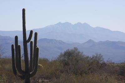 Scottsdale Residential Lots & Land For Sale: 131xx E Aloe Vera Drive
