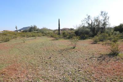 Surprise Residential Lots & Land For Sale: 153xx W Bob White Way
