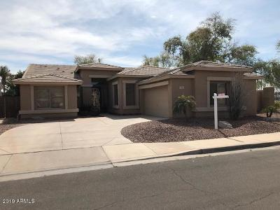 Chandler Single Family Home For Sale: 769 W Aloe Place