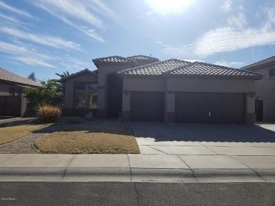 Gilbert Single Family Home For Sale: 3390 S Colt Drive