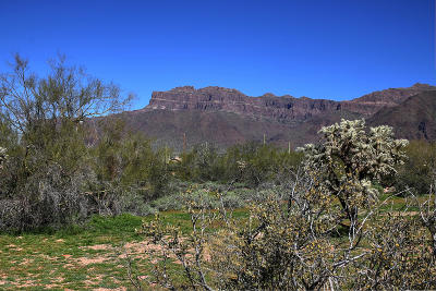 Gold Canyon Residential Lots & Land For Sale: 3000 S Prickly Point Drive