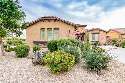 San Tan Valley Single Family Home For Sale: 937 W Desert Lily Drive