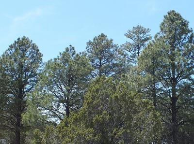 Overgaard AZ Residential Lots & Land For Sale: $26,000