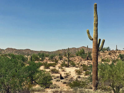 Queen Creek Residential Lots & Land For Sale: N Homestead Lane