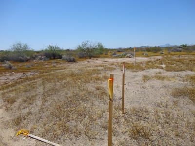 Residential Lots & Land For Sale: 363xx W Raw Land B