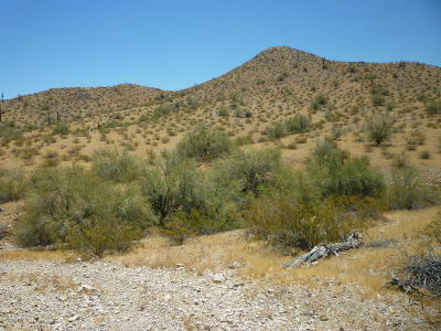 Goodyear Residential Lots & Land For Sale: W Xxxxx