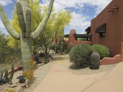 Cave Creek Single Family Home For Sale: 35011 N Sunset Trail