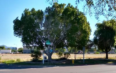 Mesa Residential Lots & Land For Sale: 4510 E Ivy Street