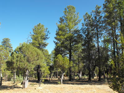 Happy Jack Residential Lots & Land For Sale: 2874 Timber Ridge Circle