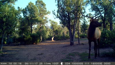 Payson Residential Lots & Land For Sale: 1213 N Heather Circle Circle