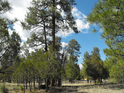 Happy Jack Residential Lots & Land For Sale: 4848 Juniper Drive