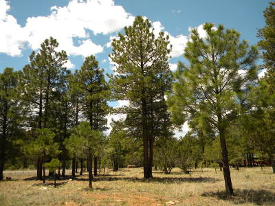 Happy Jack Residential Lots & Land For Sale: 4237 Navajo Drive