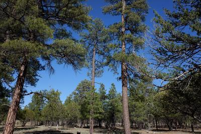 Happy Jack Residential Lots & Land For Sale: 2334 Pine Canyon Drive