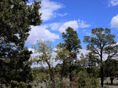 Happy Jack Residential Lots & Land For Sale: 9046 Mogollon Trail