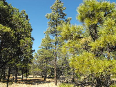 Happy Jack Residential Lots & Land For Sale: 6479 Whispering Pine Dr