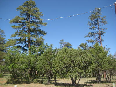 Happy Jack Residential Lots & Land For Sale: 5651 Cripple Creek