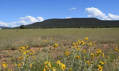 Yavapai County Residential Lots & Land For Sale: Signal View Road