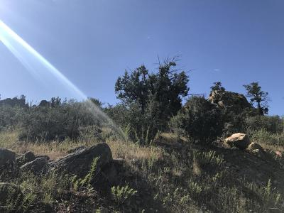 Prescott Residential Lots & Land For Sale: 2291 Willow Creek Road