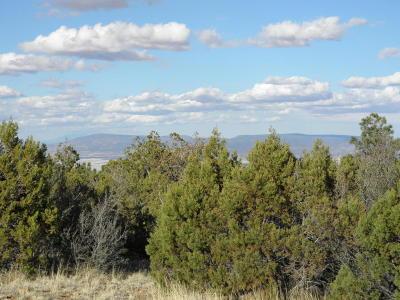 Prescott, Prescott Valley, Chino Valley, Dewey-humboldt Residential Lots & Land For Sale: Spruce Mountain Road