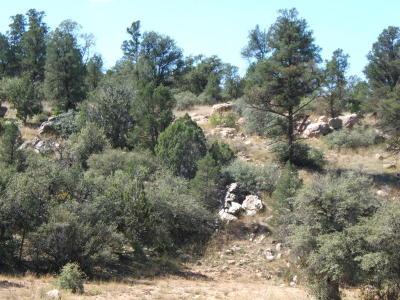 Prescott Residential Lots & Land For Sale: 16700 N Top View Lane