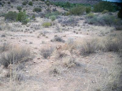 Residential Lots & Land For Sale: 4580 N Paiute Tr