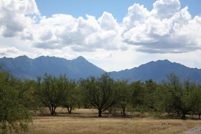 Pima County Residential Lots & Land For Sale: 3800 S Camino De La Canoa