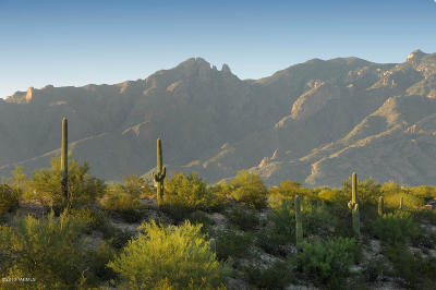 Tucson Residential Lots & Land For Sale: 3232 E Camino Boscaje Escondido