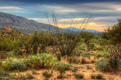 Tucson Residential Lots & Land For Sale: N Camino Cascabel