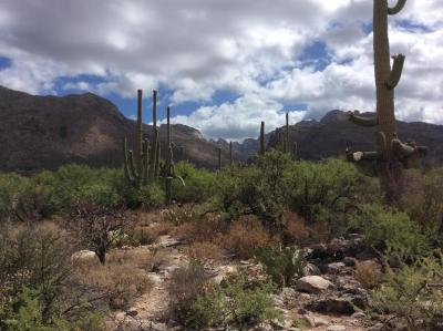 Tucson Residential Lots & Land For Sale: 1496 E Canyon Spring Court #233