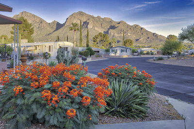 Oro Valley Single Family Home For Sale: 10730 N Highlands Drive