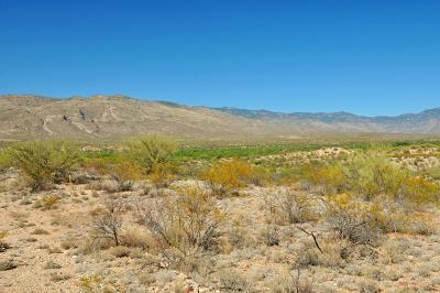 Tucson Residential Lots & Land For Sale: 7013 S Avenida Del Potrillo