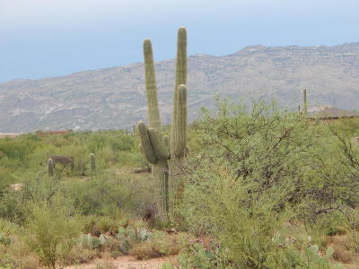 Vail AZ Residential Lots & Land For Sale: $99,800