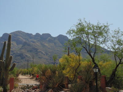 Oro Valley Single Family Home For Sale: 9141 N Overlook Drive
