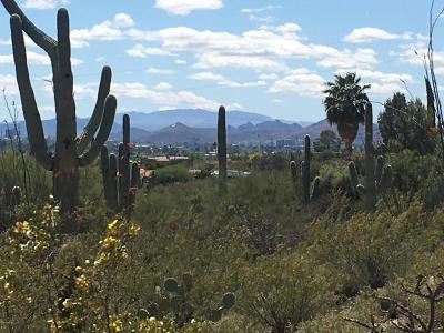 Tucson Residential Lots & Land For Sale: 2939 E Camino A Los Vientos #36
