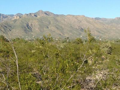 Tucson Residential Lots & Land For Sale: 3550 N Larrea Lane