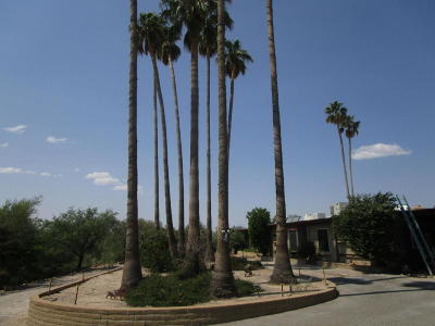 Single Family Home For Sale: 1438 W San Lucas Drive